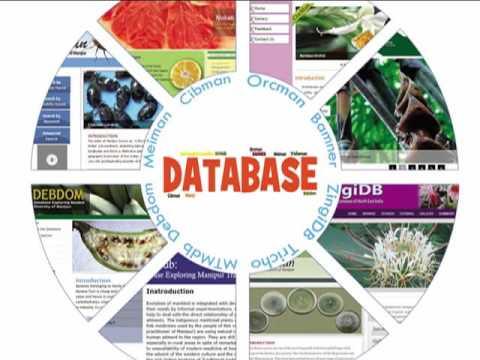 database movies