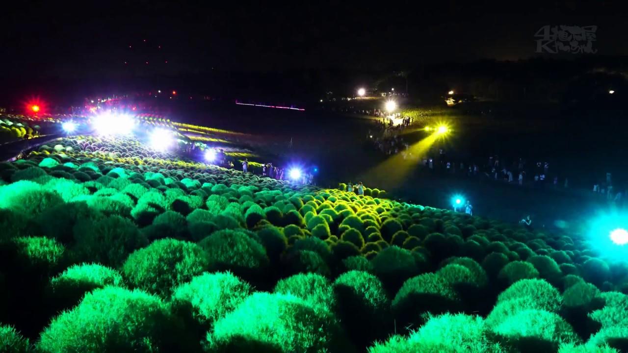 海浜 公園 コキア ライト アップ