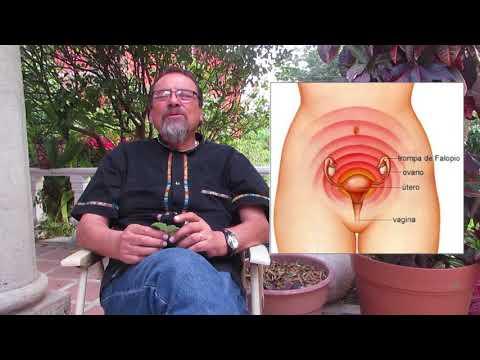 Dr. Raúl Vargas: Planta Medicinal: El Orégano, sus usos y beneficios