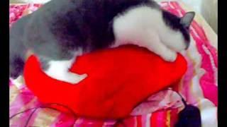кот и подушка.mp4