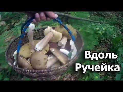 Вопрос: Почему грибы любят расти вдоль тропинок?