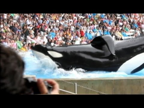 'Blackfish' Documentary Takes On Seaworld