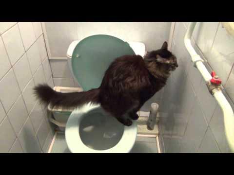 хожу в туалет черной водой телефоны, часы