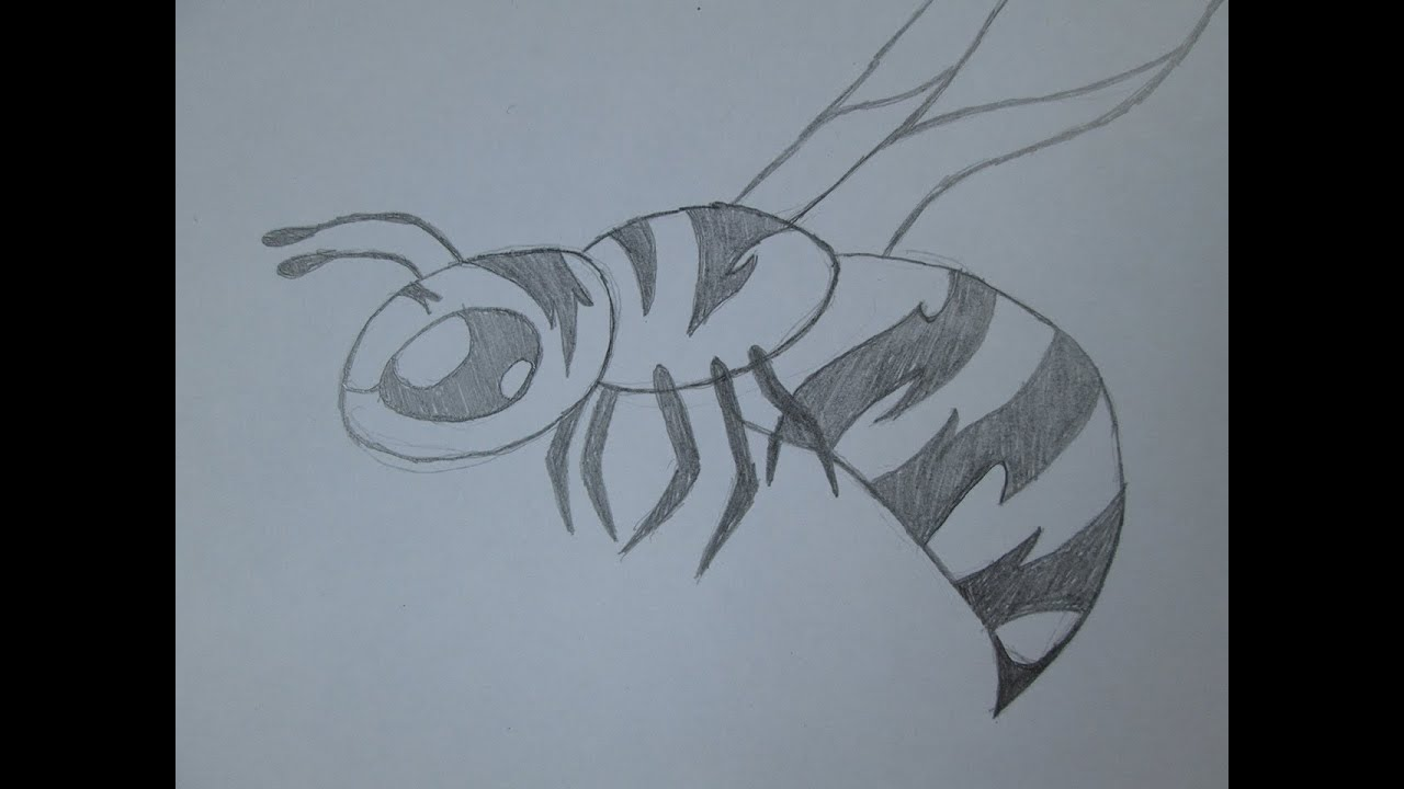Worksheet. Cmo dibujar una abeja  YouTube