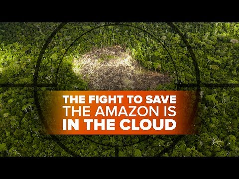 The fight to save the Amazon on the ground and in the cloud