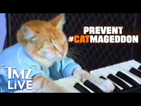 Truth Campaign Wants To Save Cat Videos, Prevent Catmageddon   TMZ