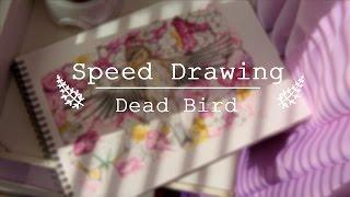 Speed Drawing | Dead Bird