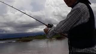 Baixar Pescaria de bargada 2018 ..  Rio araguaia/ Luis alves\