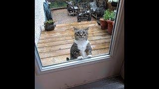 Смешные Видео Приколы с Котами. Смешные Коты до Слез. Смешные Животные 2019.#17