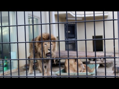 京都市動物園 Kyoto City Zoo