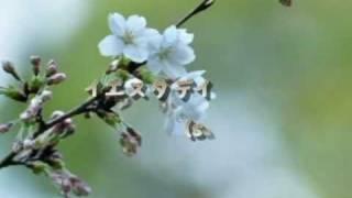 sacraの『イエスタデイ』 を 弾き語りの上手なNOBUサン のギター音源で コラボしてみました♪ 歌:akane&kira ☆写真はすべて お友達のHAL爺サンに提供して頂きました♪゜.