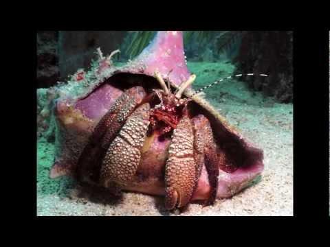 MesoAmerican Barrier Reef