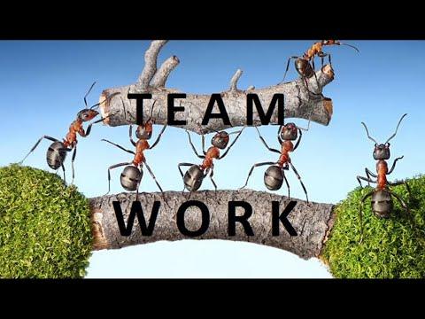 #teamwork- -#motivational-message- -#whatsapp-status-video- -30-second-video- -#life-quotes-2019