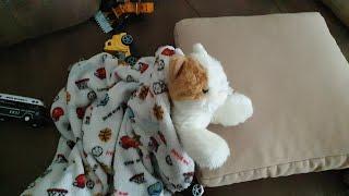 """Fatih Selim kedi""""sinin diş""""lerini fırçalıyor.sürpriz oyuncak kutusuna girip bize oyunlar yapıyor"""
