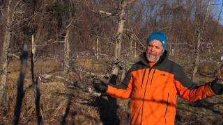 Apple pruning tip #2 - It's all about light