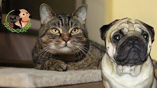 Сколько живут собаки? Как  продлить жизнь собаке?
