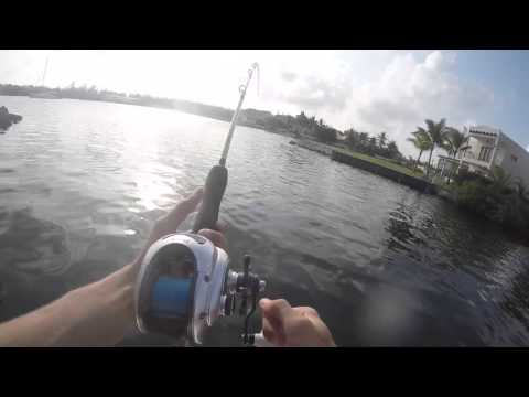 Canal Fishing for Monster Barracudas in Grand Cayman
