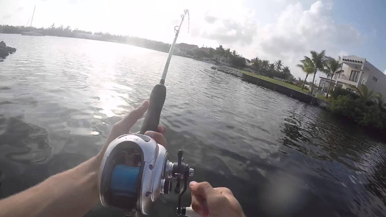 Canal fishing for monster barracudas in grand cayman youtube for Grand cayman fishing