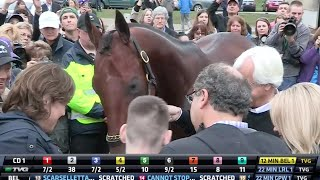 American Pharoah After the Breeders' Cup Classic