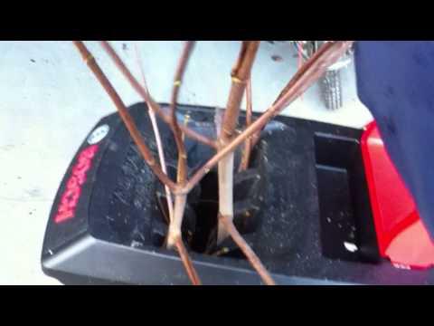 Видео обзор: Измельчитель BOSCH AXT 25TC