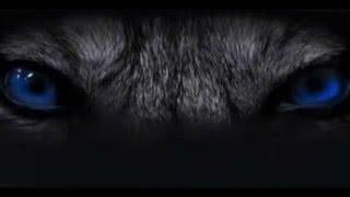 Hybrid Justice - Trailer