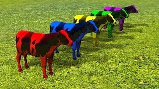 Learn Colors with 3D Cows For Kids | Colours With Animals For Children Toddlers