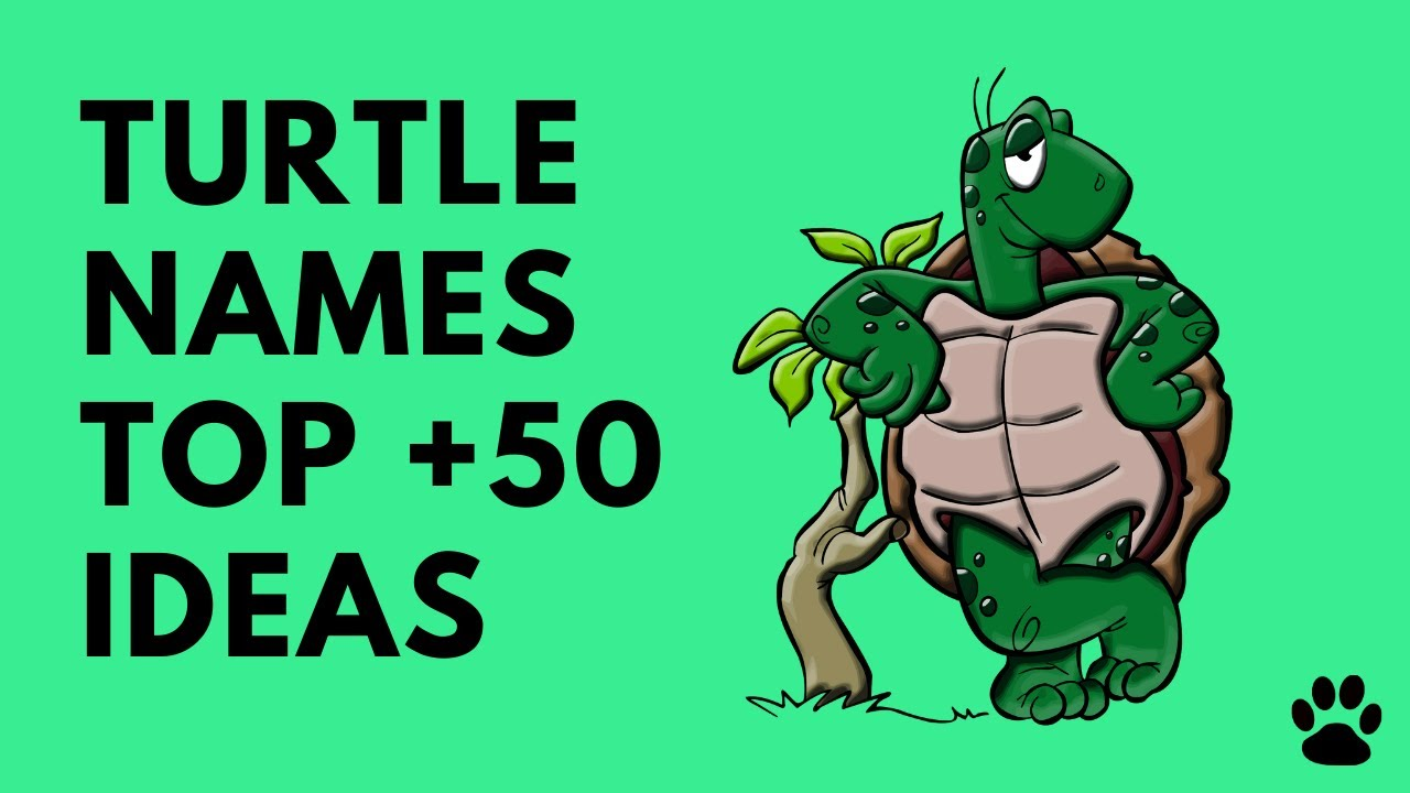 Best Turtle Names Tortoise Names 50 Ideas Great List Names Youtube
