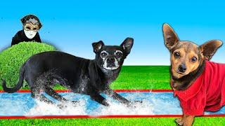 Dogs First Time on a Slip N Slide Challenge in our Backyard! | PawZam Dogs