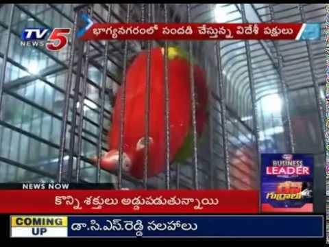 Foreign Birds Hulchal in Hyderabad : TV5 News