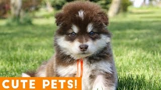 Cutest Pets of the Week Compilation February 2018   Funny Pet Videos