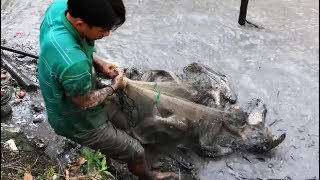 INCREDIBLE HUGE CATFISH CATCH!