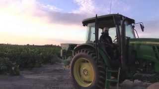 Sikhi is like farming! @Sikh Farm, Fresno, California