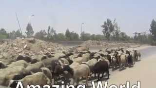 PAUL HODGE: EGYPT GIZA PYRAMIDS, SOLO AROUND WORLD IN 47 DAYS, Ch. 116,  Amazing World in Minutes