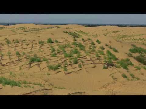 Future Forest Kubuqi Desert Project