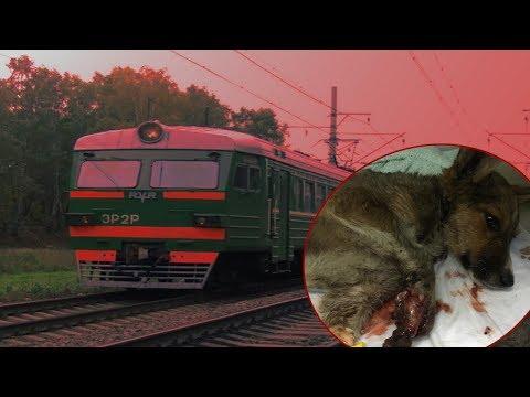 Раненый поездом щенок. Как живет Эртан сегодня?