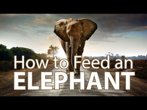 TWiP 323: How to Feed an Elephant