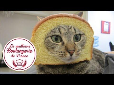 """Headshot d'un chat dans """"La meilleure boulangerie de France"""" (M6)"""