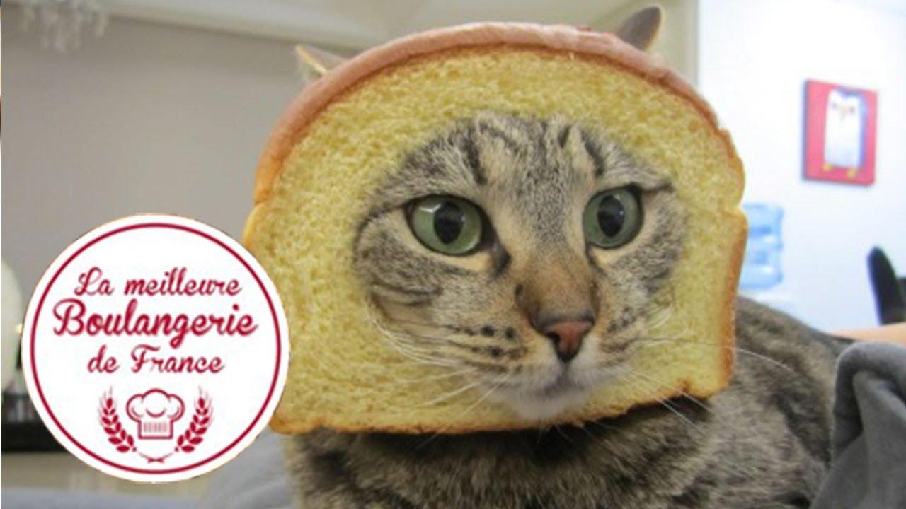 Headshot D Un Chat Dans Quot La Meilleure Boulangerie De