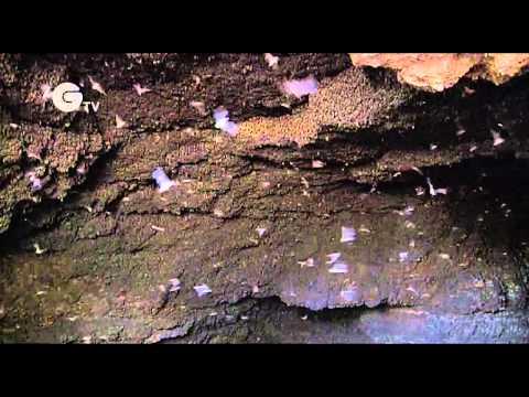 Rodrigo Medellin - Bat conservation in Mexico and Latin America