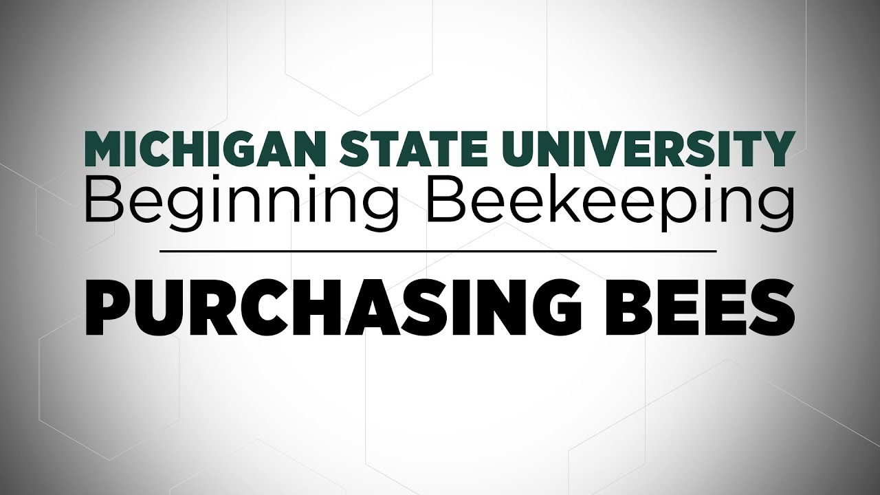 Beginning Beekeeping: Purchasing Bees