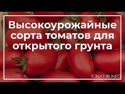 Высокоурожайные сорта томатов для открытого грунта | toNature.Info | черенкование | размножение | выращивание | справочник | пересадка | огородные | комнатных | комнатные | растения | растений