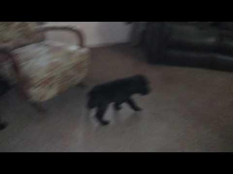 PuppyFinder.com : Exercise