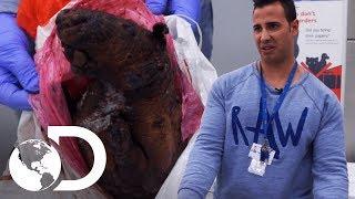Um porco-espinho congelado na alfândega | Controle de Fronteiras | Discovery Brasil