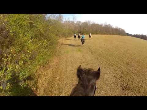 Old Morgan horse running free using GoPro hero 2