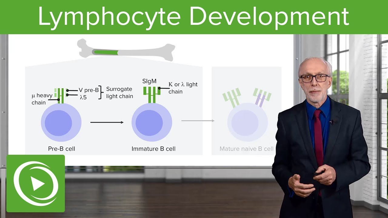 Adaptive Immune System: Lymphocyte Development – Immunology | Lecturio