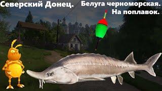 Белуга на поплавок. + развлечения на ультралайт. [1440p] Русская рыбалка 4. Russian Fishing 4.