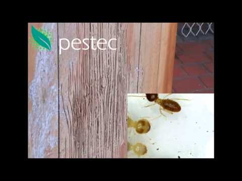Termites Attack A Piece Of Furniture Inside A House