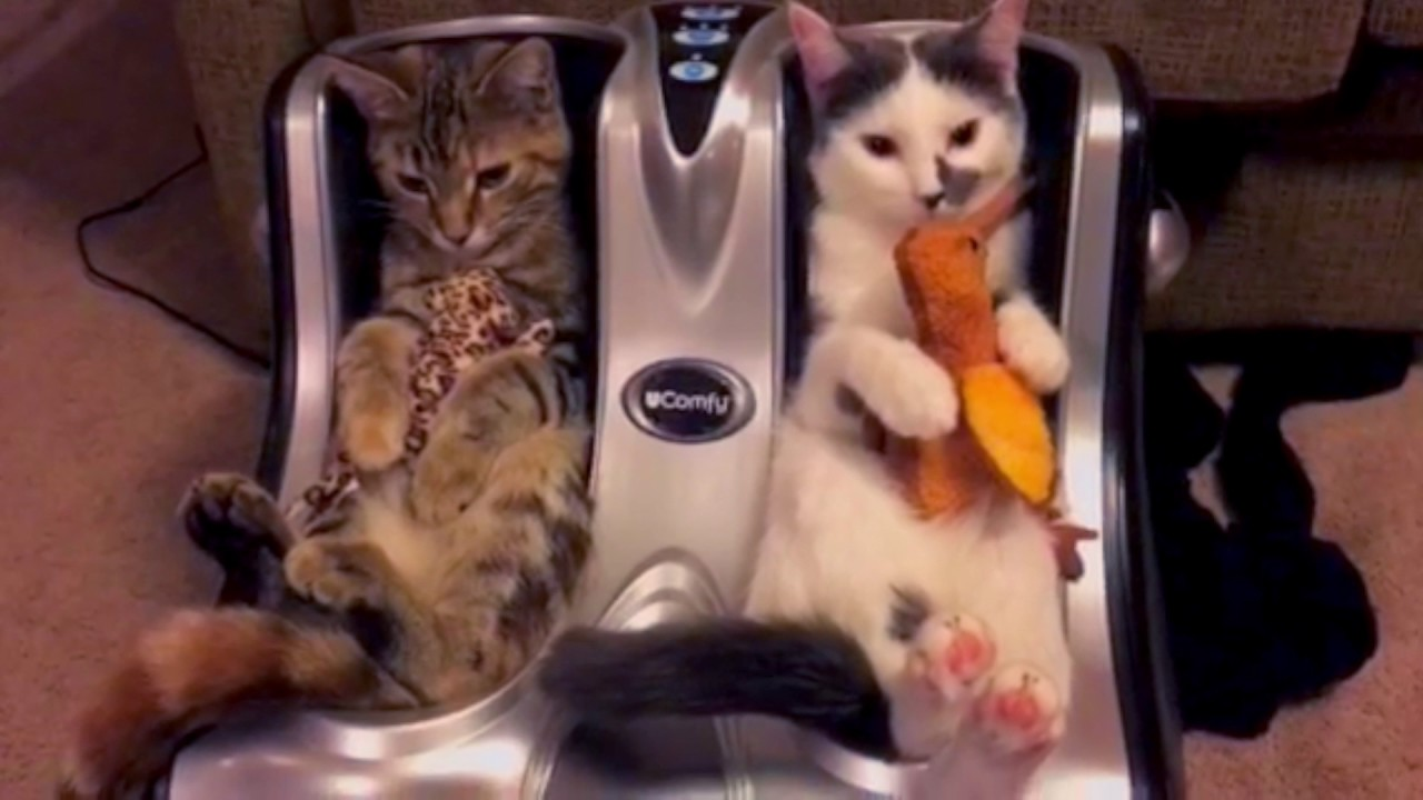 Car Seat For Cats