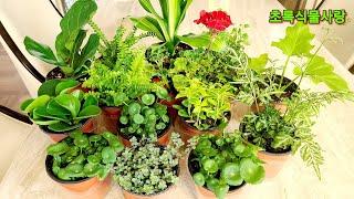 작은 사이즈의 관엽식물 온라인 구매/착한 가격과 이름 …