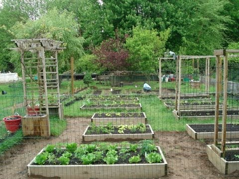 Backyard Organic Gardening Ideas - How My Dad Transformed ...